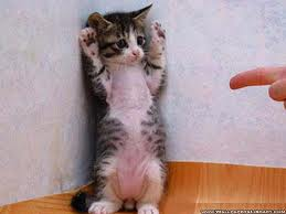 Котёнок стоит в углу подняв лапы, а ему кто-то грозит пальцем