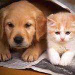 Котёнок и щенок лежат рядом на полу, прикрывшись газетой