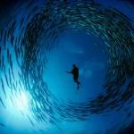 Дайвер в воде на фоне неба, а вокруг него по кругу плавает косяк рыб
