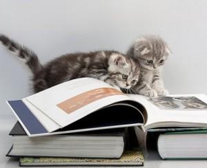 Котята читают книги