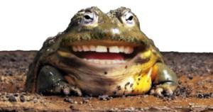 Жаба с человеческими зубами улыбается
