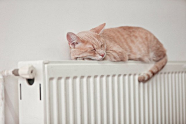 Кошка спит на стальном регулируемом радиаторе отопления